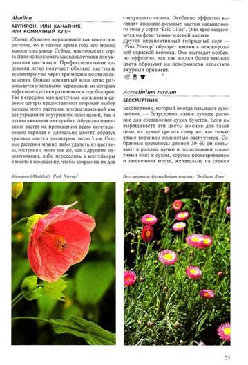 Фото с описанием однолетних цветов